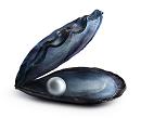 BB-Muschel 2020-klein